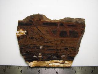 Biggs Jasper Lapidary Slab