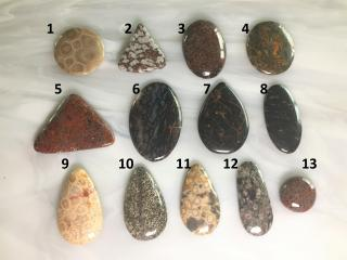 Assorted Fossilized Designer Cabochons